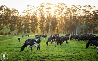 WA dairy to become a global leader